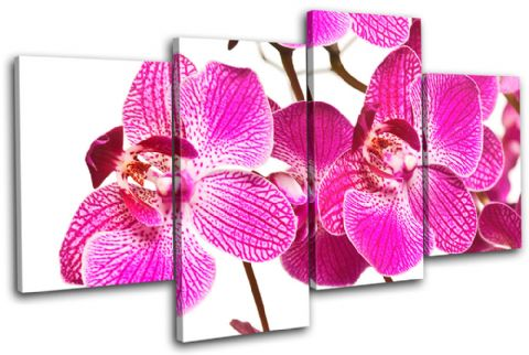 Orchids Flowers Floral - 13-1665(00B)-MP04-LO